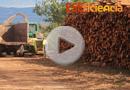 Visita a instalaciones eficientes de Biomasa en la CM