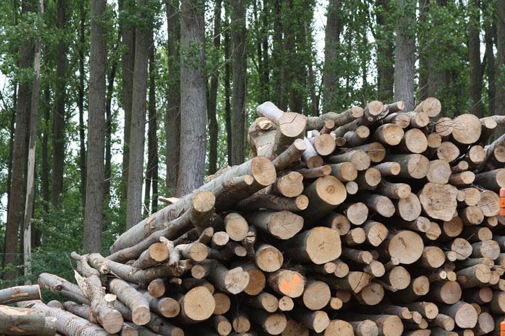 informe biomasa 4