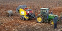 EuroPruning demuestra el potencial de los restos de poda como biomasa