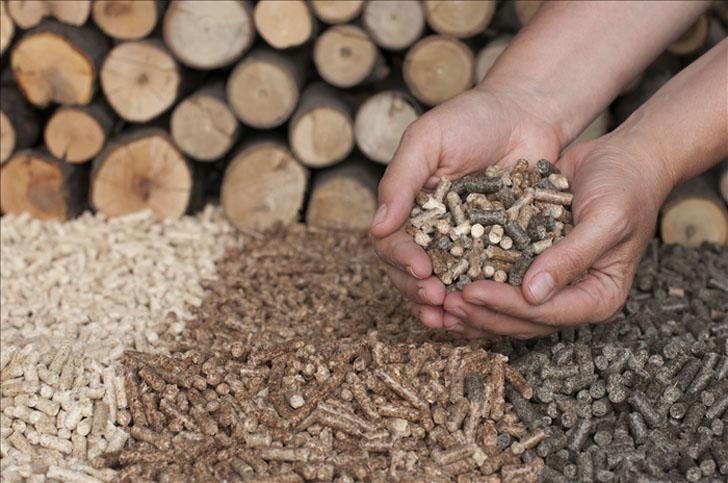 Acuerdo de colaboración entre CIRCE y Forestalia Renovables para impulsar el uso de la biomasa en Aragón.