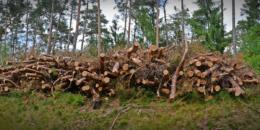 Uso óptimo y sostenible de la Biomasa para la Energía en la UE después de 2020