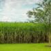 CENER coordina un estudio sobre emisiones del ILUC asociado a los Biocombustibles