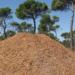 Castilla-La Mancha apuesta por la Biomasa en las calderas de los edificios públicos