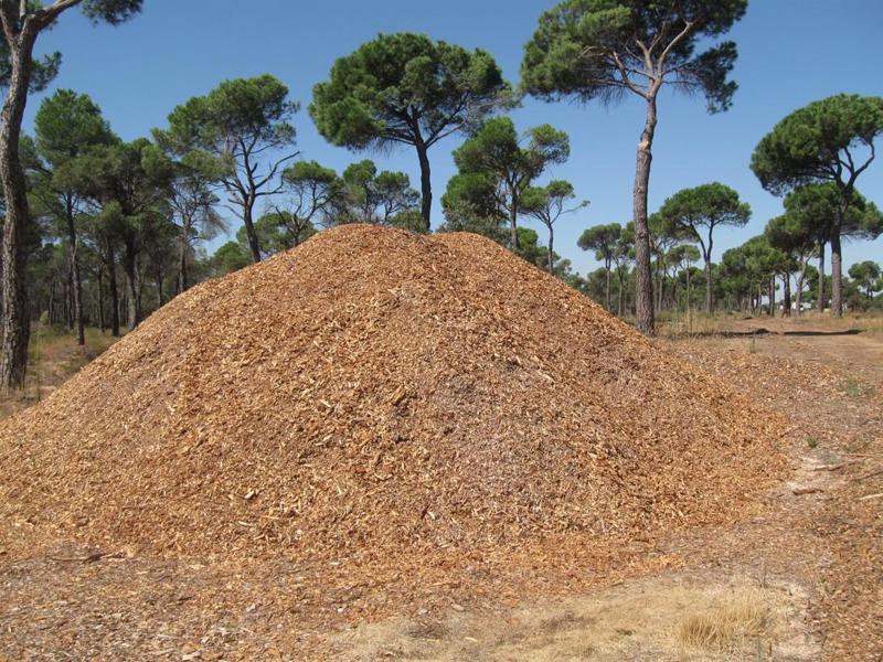 Biomasa forestal.