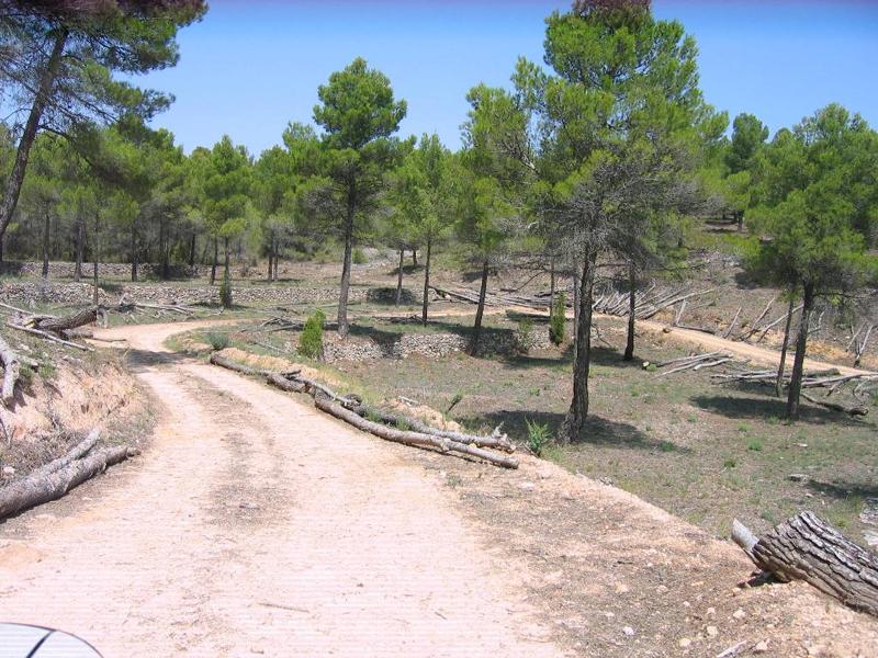 Área verde de recreación.