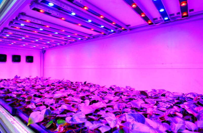 LED rojo y azul para mejorar el crecimiento de las plantas.