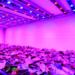 El crecimiento de la luz de horticultura impulsa el desarrollo de la tecnología LED y de la iluminación eficiente