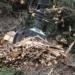 La UPM desarrolla una metodología para planificar la ubicación óptima de plantas de biomasa