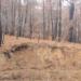 Veolia colabora en la prevención de incendios forestales a través de su empresa de biomasa Enerbosque
