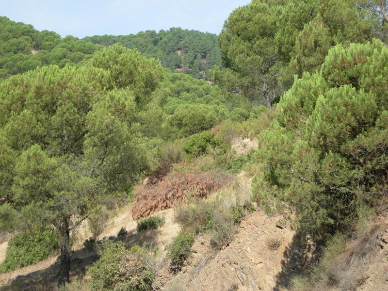 Andalucía alberga el 35% de la potencia total para aprovechamiento de biomasa existente en España