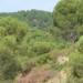 Andalucía pretende aportar con energías renovables el 25% del consumo final bruto en 2020