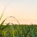 La bioenergía moderna, la renovable que más crecerá hasta 2023