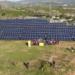 La cooperativa Som Energía inaugura una planta solar en Sevilla que abastecerá a 1.370 viviendas