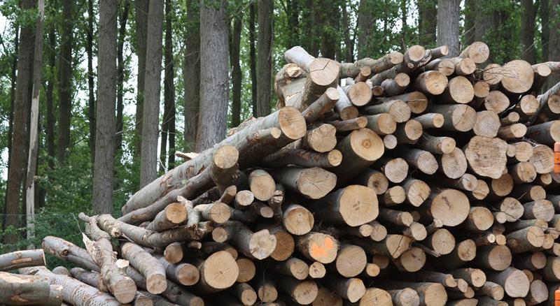 Agricultura convoca ayudas a la cooperación para el suministro sostenible de biomasa por valor de 240.000 euros