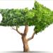 Científicos europeos elaboran una agenda para aprovechar el potencial de la bioenergía en la transición energética