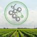 El sector vitivinícola catalán trabaja en un software para mejorar la gestión energética de la cadena de producción