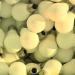Ambiplace, la iniciativa para prevenir la generación de residuos, se estrena con 25.000 bombillas y luminarias