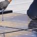 Un total de 90 proyectos han recibido las ayudas para el autoconsumo fotovoltaico en pymes baleares