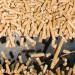 El sector de la biomasa garantiza el aprovisionamiento del mercado en todo el territorio