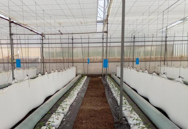 IFAPA lidera una investigación para mejorar la producción bajo invernadero con sistemas pasivos de calefacción y refrigeración