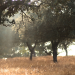 La Junta de Extremadura subvenciona la construcción de tres fábricas de pellets