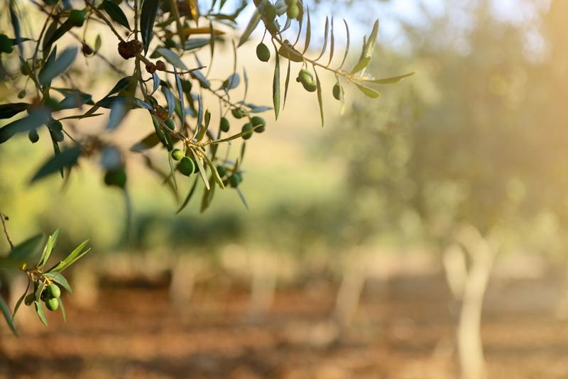 ¬La Consejería de Agricultura y CTA presentan una plataforma para acelerar la digitalización del sector de la biomasa