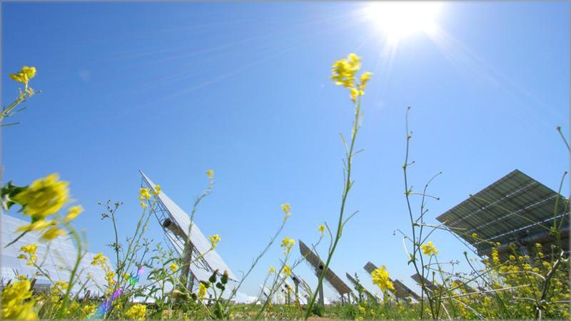 Paneles fotovoltaicos en el campo