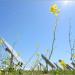 Aprobado el segundo paquete de ayudas para proyectos innovadores renovables