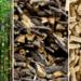 La CE abre a comentarios la normativa sobre los criterios de sostenibilidad de la biomasa forestal
