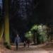 Las soluciones de Schréder reducen el consumo energético del parque Bois de la Cambre de Bruselas